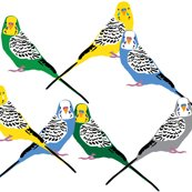 Rrparakeets-color_shop_thumb