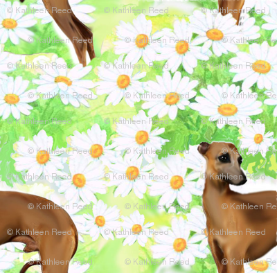 Italian greyhound and daisies fabric