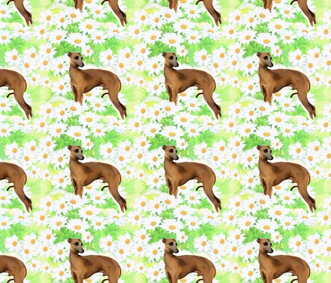 Rrrseamless_italian_greyhound_and_daisies_shop_preview