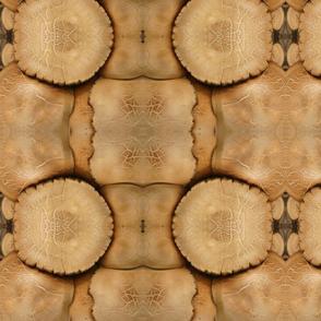 Mushroom Variation