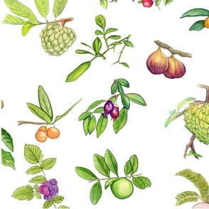 tropicalfruitrepeat