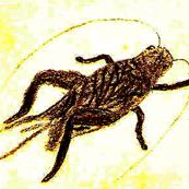Cricket Circle