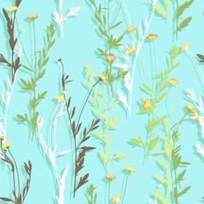Seaside daisy
