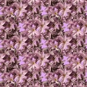 Hyacinth Flowers - pink petals