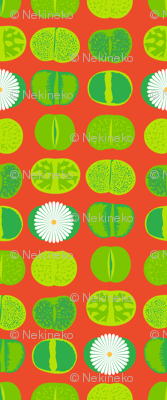 Lithops (Orange)