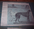 Rrgreyhound_and_whippet_comment_191016_thumb