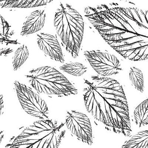 Leaf Pattern Black and White