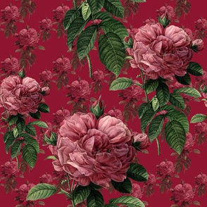 Redoute' Roses ~ Deep Rose ~ Medium