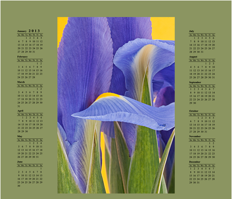 2013 Iris Calendar fabric by kirablossoms on Spoonflower - custom fabric