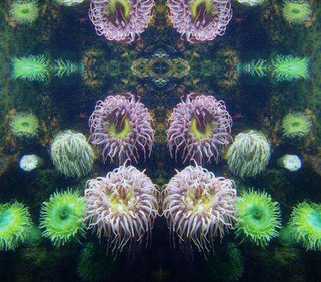 urchins fabric by junej on Spoonflower - custom fabric