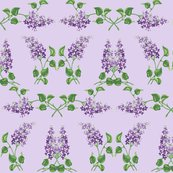 Rrlilacs_shop_thumb