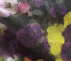 violets 4