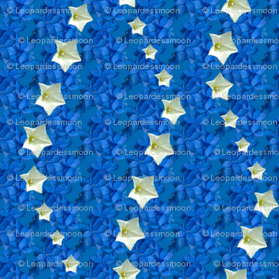 blue star 4