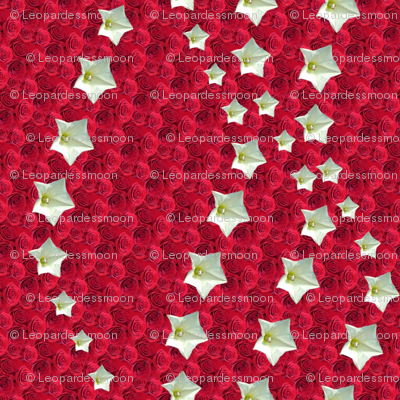 red star 6