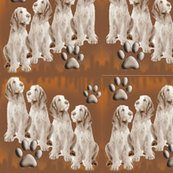Rrr1288134_rfinished_spinone_pups_shop_thumb