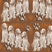 Italian spinone Puppies