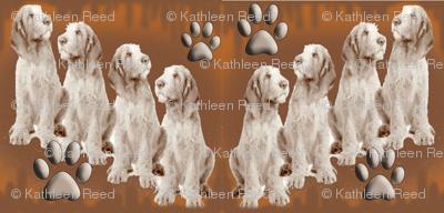 Italian spinone Puppies
