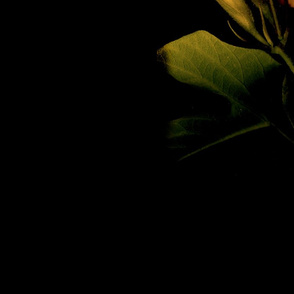 mixed_flowers_lower_light