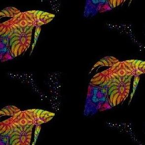 Fish School:  Phylum Chordata Rainbow