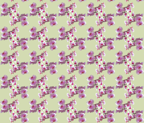 Orchids fabric by penelopeventura on Spoonflower - custom fabric