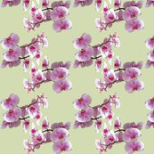 Rrrrorchids_shop_thumb