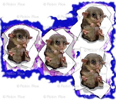 Possum Nursery