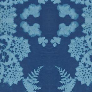 blue_fern