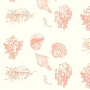 shells_delft_coral