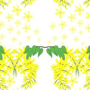 Cassia-fistula