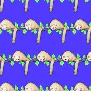 Australian White Possum