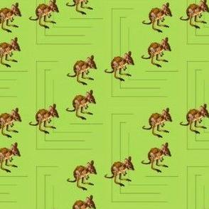 Baby Kangaroos (2)