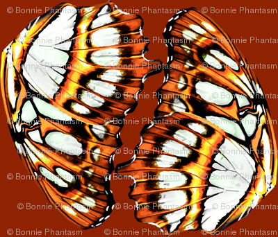 Pearl-bordered fritillary butterfly - Orange colorchange