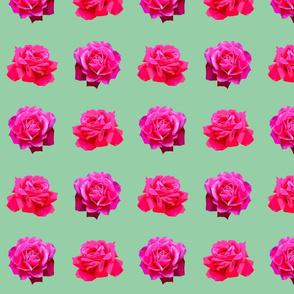 1955_roses