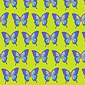 Butterfly-ch-ed-ed