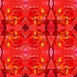 Grenada Rose