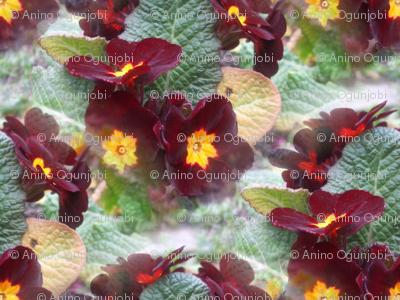 primrose - wine