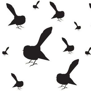 Kiwi Holiday Black Fantails