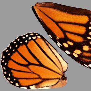 Medium Monach Costume Wings Fabric