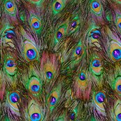 Rrrpeacockfeathers-stripeinvasion1_shop_thumb