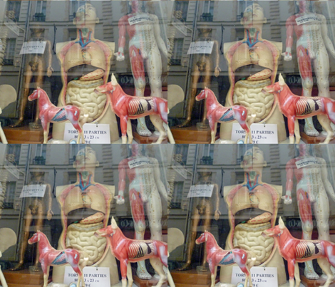 Shop Window - Medical models