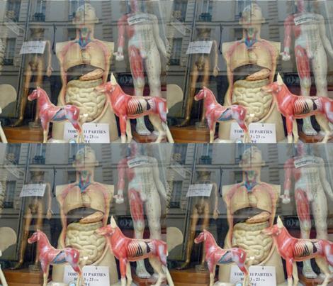 Shop Window - Medical models