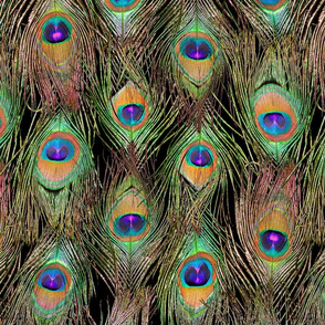 Peacock Feathers Invasion - Singles