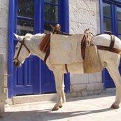Rgreek_horse_ftqtr_18h_shop_thumb