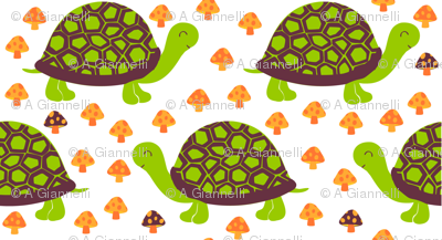 summer turtles