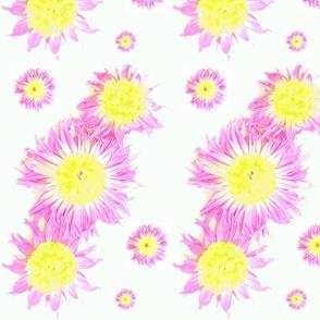 lightflowers-ed