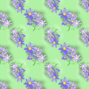 daisy_lavender