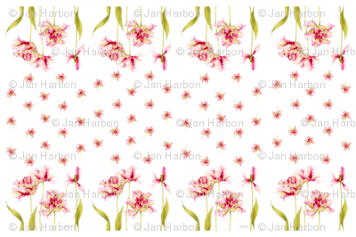 parrot tulip panel