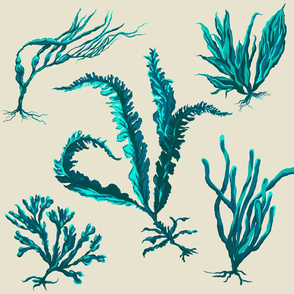 blueseaweed2