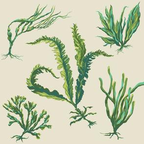 green_seaweed2