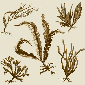 neutral_seaweed2